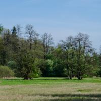 PP Louky u Černého lesa