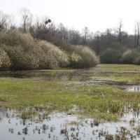 Kačení louka Nature Reserve