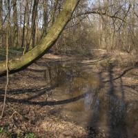 Ramena řeky Moravy