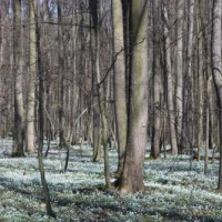 NPR Polanská niva, Blücherův les