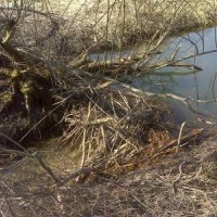 Suchdolský potok