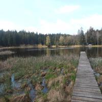 Havlíčkova Borová, rybník Podhorský