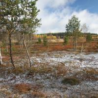 Krásenské rašeliniště po vyřezávce.