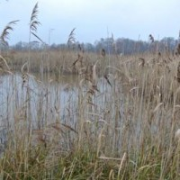 Přírodní rezervace Skučák