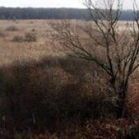 Přírodní rezervace Rezavka