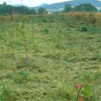 Výsadba stromů na lokalitě