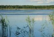 NPR Bohdanečský rybník | Autor: Zuzana Růžičková