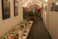 Výstava hub v Městském muzeu v Králíkách | Autor: Zuzana Růžičková