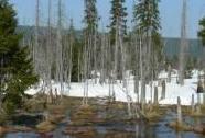 Podmáčené a rašelinné smrčiny při jarní oblevě v horní části NPR Rašeliniště Jizery | Autor: Vladimír Vršovský