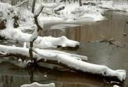 Stará řeka ve stejnojmenné NPR v zimě | Autor: Miroslav Hátle