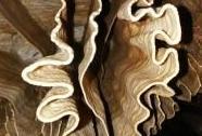Nová Amatérská jeskyně - sintrová výzdoba Západní macošské větve | Autor: Ivan Balák