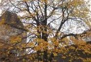 Jírovec na Helfštýně, podzim na nádvoří | Autor: Olga Suldovská