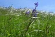 Úzkolisté suché trávníky, porosty bez význačného výskytu vstavačovitých | Autor: Roman Hamerský