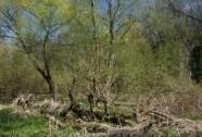 EVL Dolní Chrudimka - niva řeky Chrudimky v Pardubicích | Autor: Zuzana Růžičková