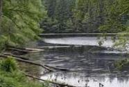 CHKO Český les - rybník Na Kolmu | Autor: Svatopluk Šedivý