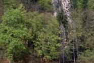 PP Baba - les se skalní stěnou na strmém východním svahu Vltavy | Autor: Alena Albrechtová