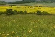 Pohled z Hladového vrchu na kopce Lounského středohoří | Autor: Jiří Bělohoubek