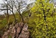 Vztyčené vrstvy bazálních devonských klastik (slepenců) v PR Babí lom | Autor: Ivan Balák