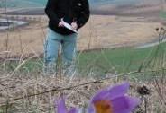 Monitoring evropsky významných rostlin | Autor: Vlastimil Sajfrt