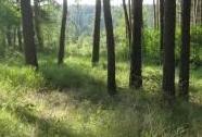 Lesostepní bory | Autor: Jiří Bělohoubek