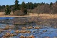 Rybník Hubský ve stejnojmenné PR v CHKO Železné hory | Autor: Zuzana Růžičková
