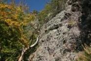 NPR Lichnice-Kaňkovy hory v CHKO Železné hory, nad Lovětínskou roklí | Autor: Zuzana Růžičková
