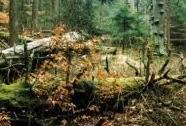 PR Polom - zachovalé pralesovité jedlobučiny   Autor: František Bárta