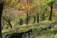 NPR Velká Pleš - břeková doubrava ve vrcholových partiích rezervace | Autor: Petr Hůla