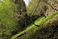 NPR Týřov - sutě v údolí potoka Oupoř, v pozadí skalní útvar Krkavčiny | Autor: Petr Hůla