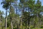 NPR Kladské rašeliny, část Malé rašeliniště | Autor: Přemysl Tájek
