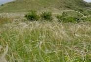 NPR Raná - pohled na JV část s výskytem stepních druhů | Autor: Šárka Kopecká