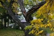 Křehovětvec žlutý v Novém Městě pod Smrkem   Autor: Šárka Mazánková