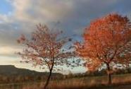 Plané třešně na Klůčku, v pozadí Ostaš | Autor: Petr Kuna