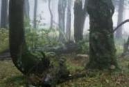 NPR Bukačka, les v mlze   Autor: Karel Gregor